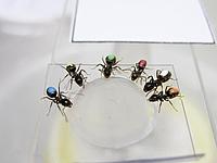 Wert ist relativ – für Menschen, wie für Ameisen